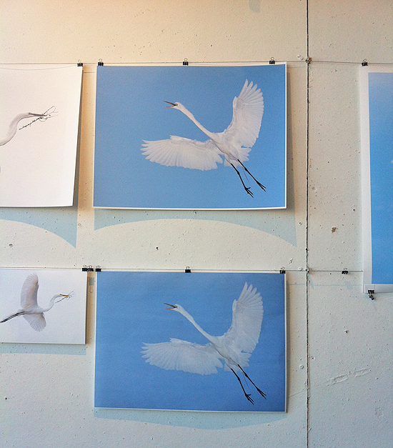 "Image taken by Trisha O'Keefe, ""White Egret"". Print on top with an Epson paper, bottom with MM-23 Shirakabe."